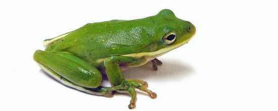Gratis SEO Tool Screaming Frog is een must